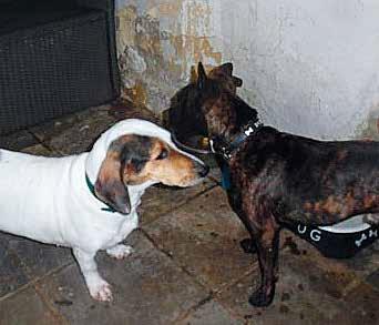 actie adoptie honden